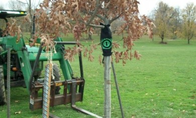 type o negative - albero peter steele - 2011