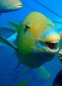 smiling fish pesce aprile 2014