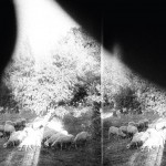 Godspeed You Black Emperor - asunder sweet and other distress - 2015