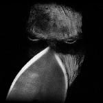 Thy Darkened Shade - prima pagina
