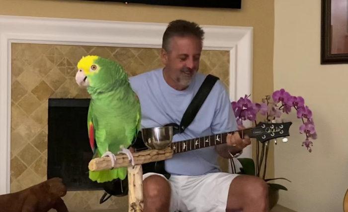 Il pappagallo che canta VAN HALEN, LED ZEPPELIN e GUNS N' ROSES